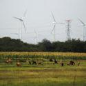 """El despojo como herramienta para generar energía """"limpia"""" en el Istmo (Reportaje)"""